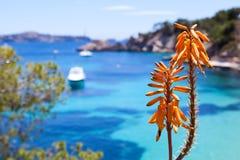 Tropical Orange Flower Stock Images