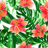 Tropical orange and pink hibiscus flowers seamless pattern Stock Images