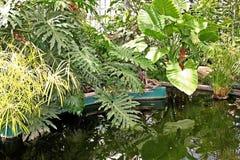 Tropical orangery with pond Stock Photos