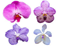 Tropical orchid flower varieties color and kind isolated on whit Stock Photography