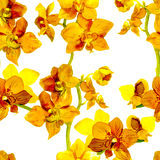 Tropical orchid flowers - exotic floral pattern. Repeating background. Water color. Stock Image