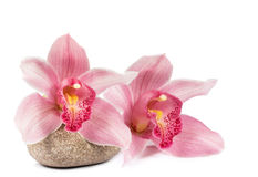 Tropical orchid with a stone for a spa Royalty Free Stock Photography