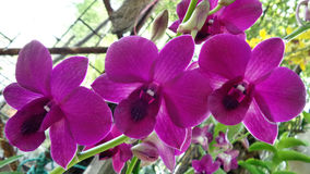 Tropical orchid Stock Image