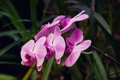 Tropical orchids Royalty Free Stock Photos