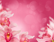 Tropical orchids. Floral background with tropical orchids for the design Stock Images