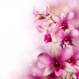 Tropical orchids Royalty Free Stock Image