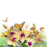 Tropical orchids Stock Image