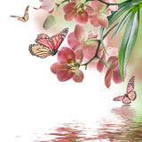 Tropical orchids and  butterfly Stock Photography