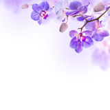 Tropical orchids. Floral background of tropical orchids Royalty Free Stock Photography