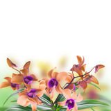 Tropical orchids Royalty Free Stock Images