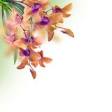 Tropical orchids. Floral background of tropical orchids Stock Photography