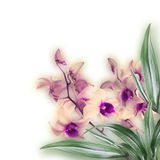 Tropical orchids Royalty Free Stock Photo