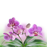 Tropical orchids. Floral background of tropical orchids Royalty Free Stock Photos