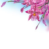 Tropical orchids Stock Images