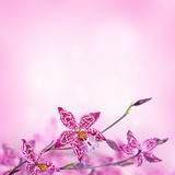 Tropical orchids Royalty Free Stock Photography