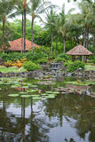 Tropical outdoor garden with palm trees and pond Royalty Free Stock Images