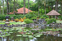 Tropical outdoor garden with palm trees and pond Stock Images