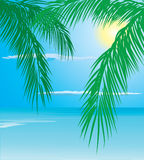 Tropical palm Stock Photography