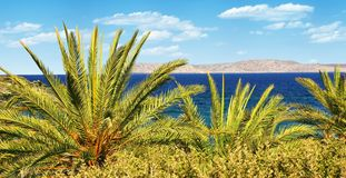 Tropical Palm. Palm trees on tropical sea on sunny day stock photography