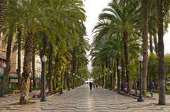 Tropical palm alley in Alicante, Spain Royalty Free Stock Photo