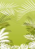 Tropical Palm Background Stock Images
