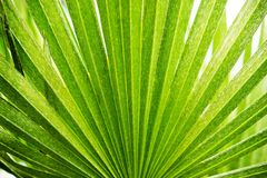 Tropical Palm Background Stock Photos
