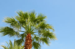 Tropical palm on background of sky Royalty Free Stock Photography