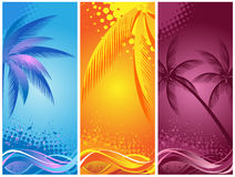 Tropical palm, background summer Stock Photo