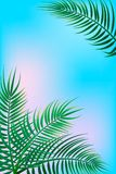 Tropical palm background royalty free illustration