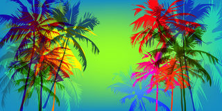 Tropical palm banner Royalty Free Stock Photography