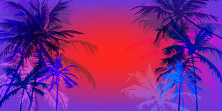 Tropical palm banner Royalty Free Stock Images