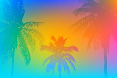 Tropical palm banner Stock Image