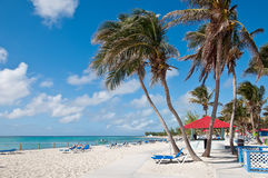Tropical palm beach. Palm beach on the tropical island in the ocean Stock Photography