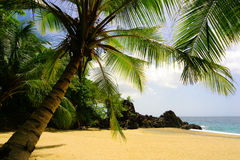 Tropical palm beach Royalty Free Stock Photography