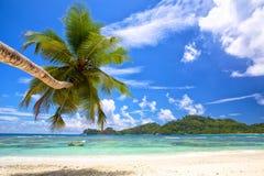 Tropical palm beach Stock Photo