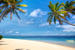 Tropical palm beach Stock Image