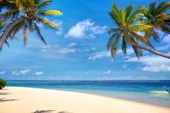 Tropical palm beach Stock Image