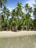 Tropical palm beach, Thailand. Tropical palm beach, Chang Island, Thailand Royalty Free Stock Photography