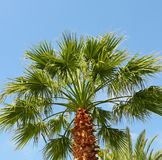 Tropical palm and blue sky Stock Photography