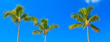 Tropical palm. Stock Photos