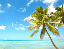 Tropical palm and caribbean sea stock image