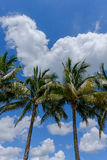 Tropical Palm and coconut trees against beautiful blue sky in th Royalty Free Stock Photos