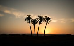 Tropical palm coconut trees on sunset sky nature background. Silhouette coconut palm trees on beach at sunset. Selective focus royalty free stock photo