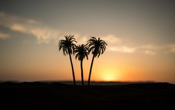 Tropical palm coconut trees on sunset sky nature background. Silhouette coconut palm trees on beach at sunset. Selective focus royalty free stock photos
