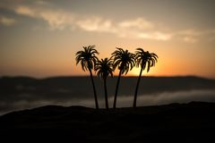 Tropical palm coconut trees on sunset sky nature background. Silhouette coconut palm trees on beach at sunset. Selective focus royalty free stock images