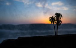Tropical palm coconut trees on sunset sky nature background. Silhouette coconut palm trees on beach at sunset. Selective focus stock photography