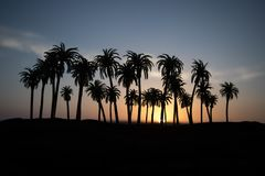 Tropical palm coconut trees on sunset sky nature background. Silhouette coconut palm trees on beach at sunset. Selective focus stock image