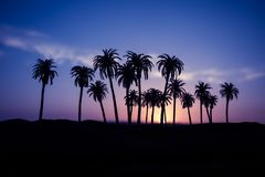 Tropical palm coconut trees on sunset sky nature background. Silhouette coconut palm trees on beach at sunset. Selective focus stock images