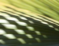 Tropical Palm Detail Stock Photos