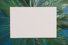 Tropical palm foliage, greenery background, summer concept.  royalty free stock image